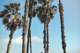 Los Angeles in 24u: chillen in Venice en Santa Monica