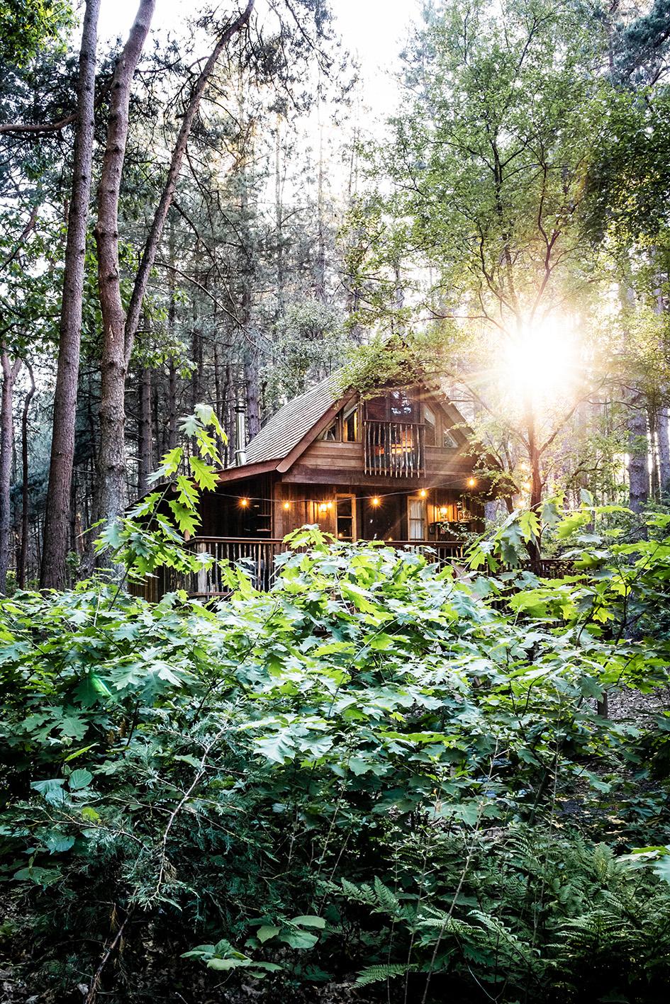 Treelodge Retie, de meest unieke cabins in België
