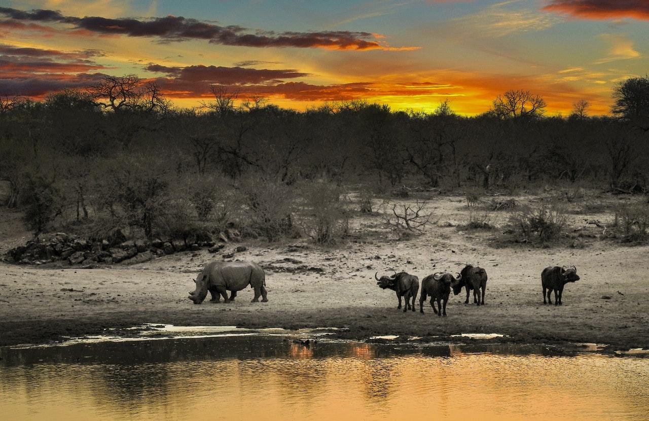 In gezelschapsspellen op safari langs de Afrikaanse savanne